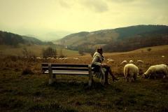 Domi-owieczki